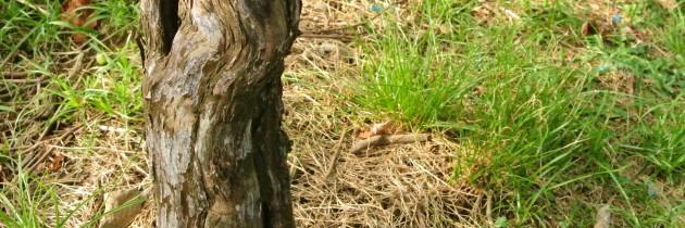 土壤(下)-20140401
