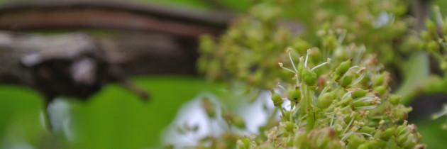 開花(下)-20140401